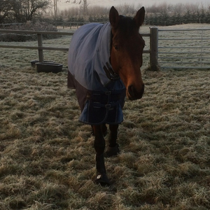 Avoiding Winter Colic in Horses