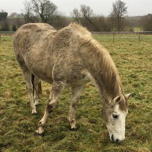 Mud Fever in Horses