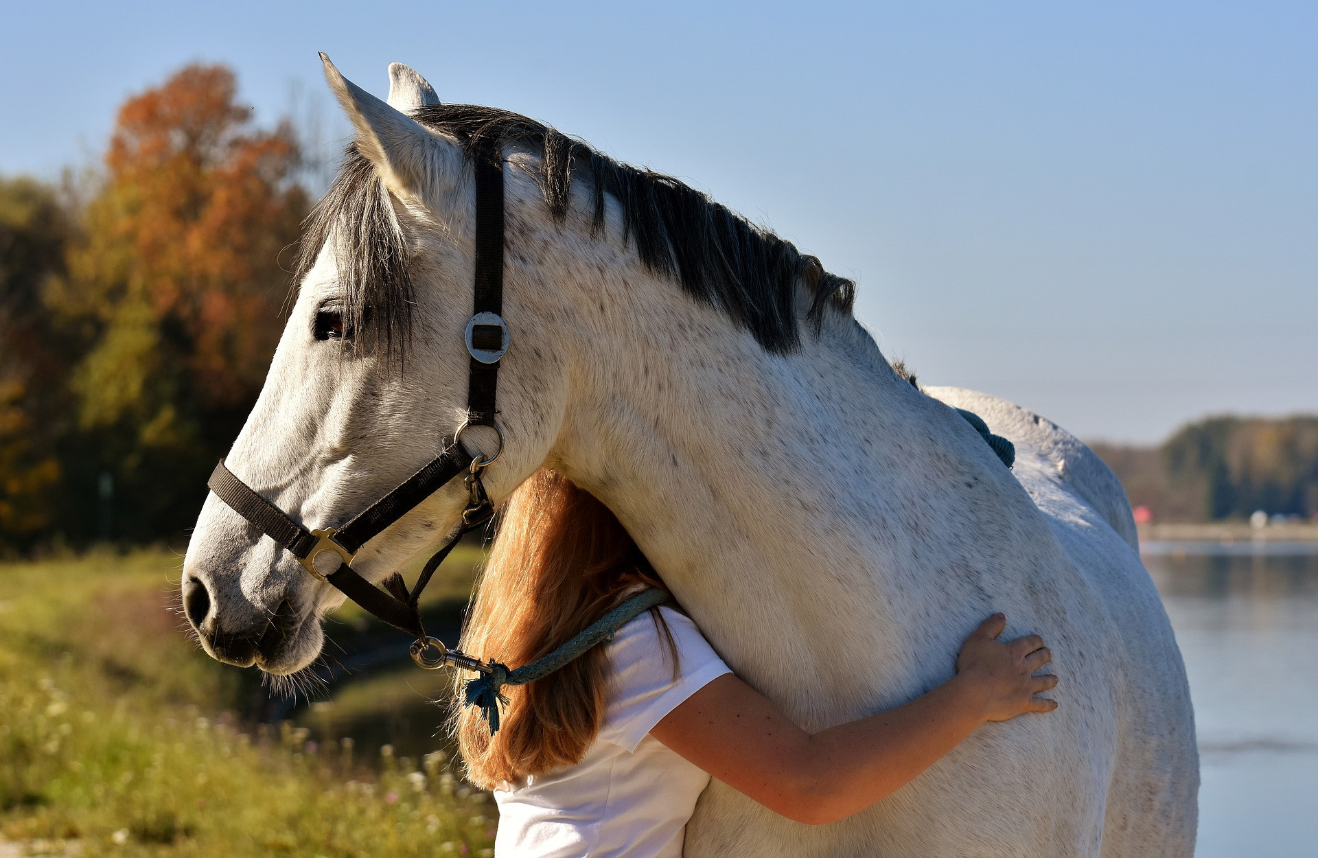 ❤️ Reasons to love horses this Valentines ❤️
