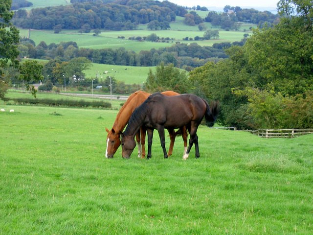 Managing obesity in horses