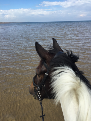 Heading to the beach this summer with your horse?  Check out our wardrobe must haves.